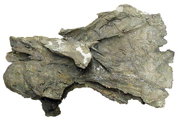 Kręg szyjny BYU 9024 (138 cm długości)