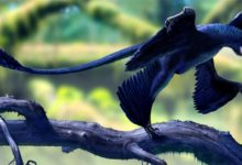 Photo of Mikroraptor (Microraptor) – mały rabuś
