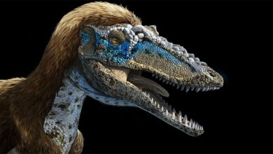 Photo of Qianzhousaurus czyli Pinokio rex