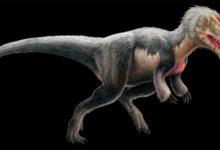 Photo of Yutyrannus – opierzony drapieżny dinozaur