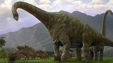 """Photo of Megazauropody czyli """"Jaszczury Gromu"""""""