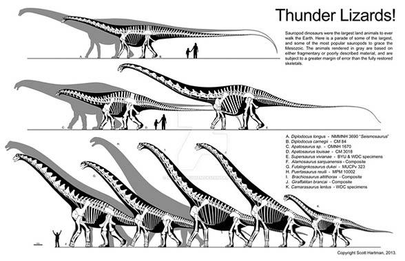 Porównanie zauropodów