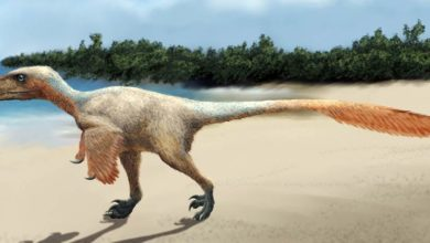 Photo of Balaur – ptak czy dinozaur?
