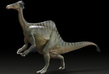 Photo of Deinocheirus mirificus – niezwykły dinozaur