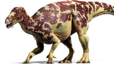 Photo of Iguanodon – pierwszy odnaleziony roślinożerny dinozaur