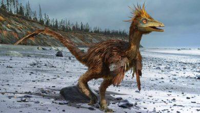 Photo of Troodon – najmądrzejszy dinozaur