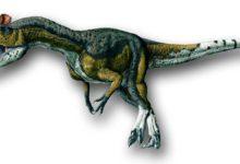 Photo of Kriolofozaur – dominujący drapieżnik Antarktydy