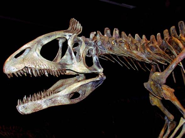 Kriolofozaur (Cryolophosaurus)