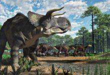 Photo of Nasutoceratops – niezwykły ceratops