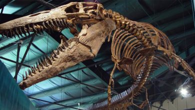 Photo of Tylozaur – postrach morskich głębin