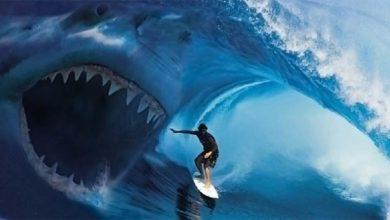 Photo of Ludojady: Ataki rekinów w New Jersey