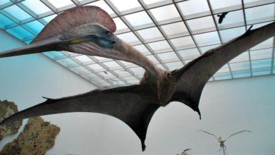 Photo of Hatzegopteryx – dominujący drapieżnik