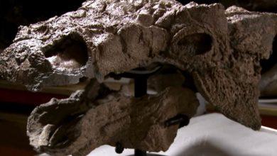 Photo of Zuul – ankylozaur z Ghostbusters