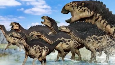Photo of Edmontozaur (Edmontosaurus)
