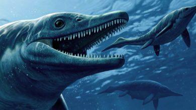 Photo of Szastazaur (Shastasaurus) – największy morski gad