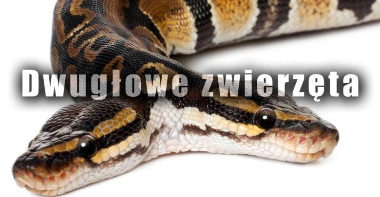 Photo of Dwugłowe zwierzęta czyli policefalia