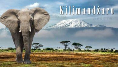 Photo of Park Narodowy Kilimandżaro