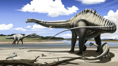 Photo of Barozaur (Barosaurus) – ciężki jaszczur
