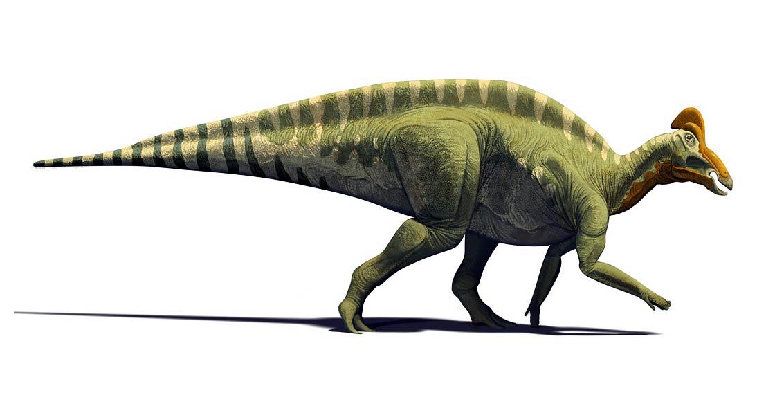 Photo of Magnapaulia – jeden z największych hadrozaurów