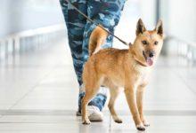 Photo of Pies Sulimova – wykrywacz narkotyków