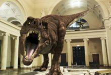 Photo of Sue – największy Tyrannosaurus rex