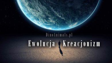 Photo of Ewolucja i Kreacjonizm – nowy serwis