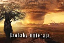 Photo of Baobaby umierają