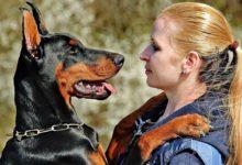 Photo of Psy rozumieją ludzkie emocje i mimikę