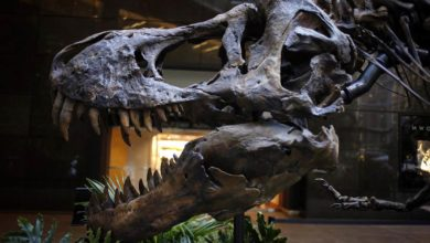Photo of Handel dinozaurami – do kogo należą dinozaury?