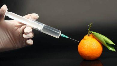 Photo of GMO – genetycznie zmodyfikowane organizmy i ewolucja