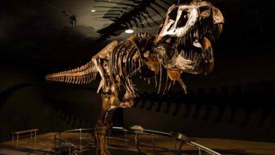 Photo of Jak długo żyły dinozaury?