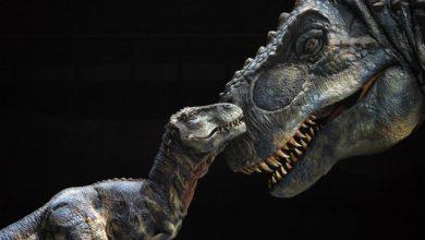 Photo of Seks dinozaurów