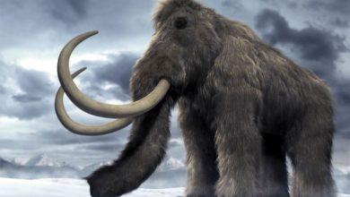 Photo of Klonowanie mamutów