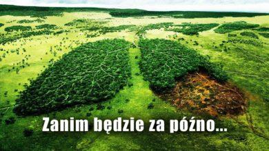Photo of Wylesianie (deforestacja) – fakty, które trzeba znać