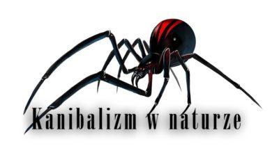 Photo of Kanibalizm wśród zwierząt