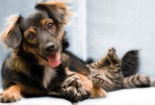Photo of Kanibalizm u psów i kotów