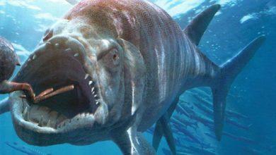 Photo of Xiphactinus – drapieżnik morski z okresu kredy