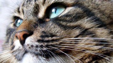 """Photo of Wibrysy – niezwykłe wąsy """"zwykłego"""" kota"""