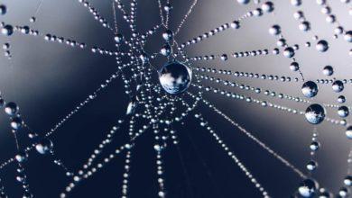 Photo of Pajęczyna – nić pajęcza albo nić przędna