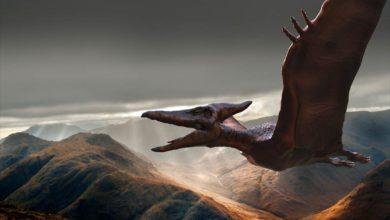Photo of Pterozaury – królowie przestworzy