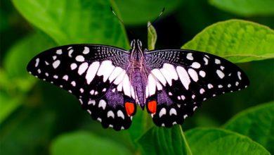 Photo of Niezwykłe skrzydła motyli