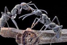 Photo of Mrówki – niezwykłe owady