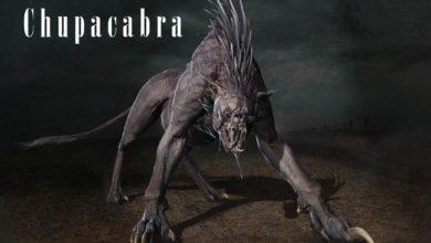 Photo of Chupacabra – tajemnicze zwierzę