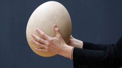 Photo of Niezwykłe ptasie jajo