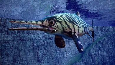 Photo of Oftalmozaur (Ophthalmosaurus) – ichtiozaur z ogromnymi oczami