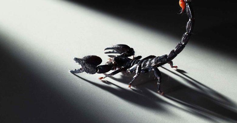Photo of Atak skorpiona i krokodyli w Meksyku