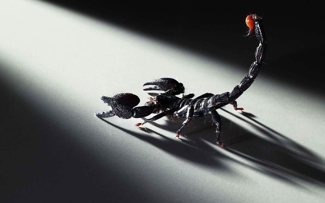Dinoanimals Pl: Atak Skorpiona I Krokodyli W Meksyku
