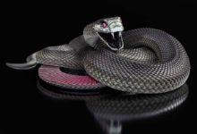 Photo of Skóra węża i jej zastosowania