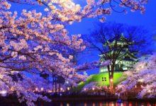 Photo of Sakura – wiosna w Tokio
