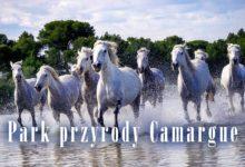 Photo of Park przyrody Camargue
